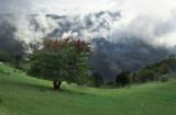 تور جنگل ابر