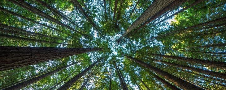 هشداری برای آینده ی طبیعتگردی: آیا درختان به زودی از بین می روند؟