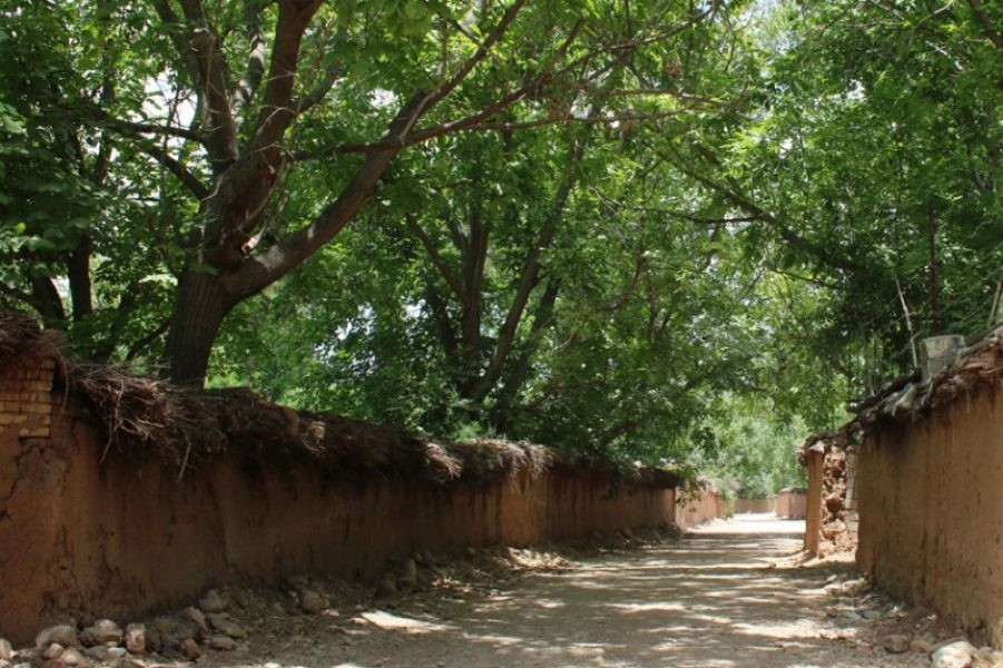 باغ های قصر الدشت