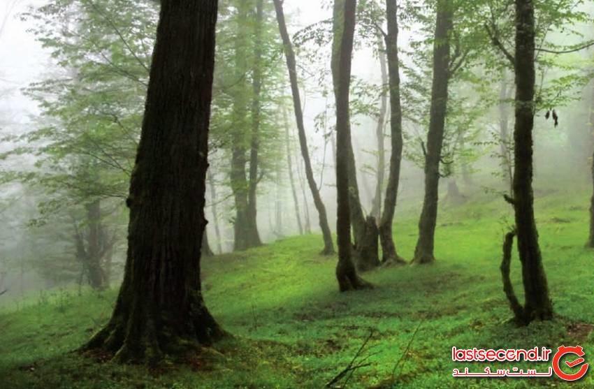 جنگل دوهزار