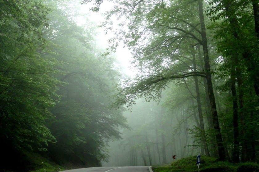 جنگل دوهزار، زیبایی دست نخورده تنکابن