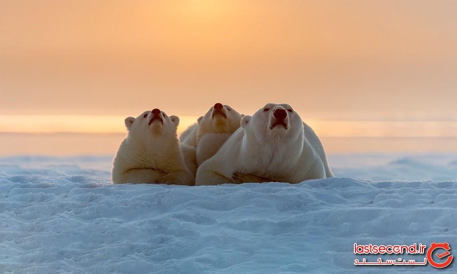 10 تفاوت بین قطب شمال و قطب جنوب
