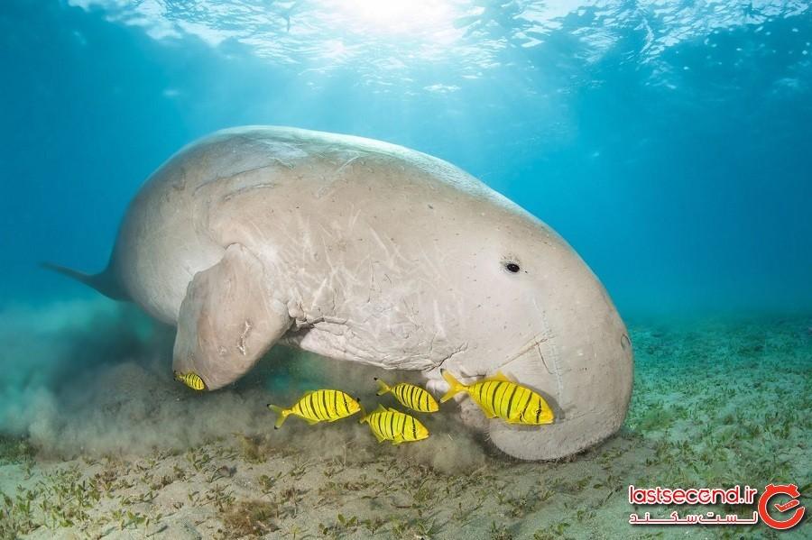 «جزیره پری های دریایی» در مالزی بهشت غواص هاست