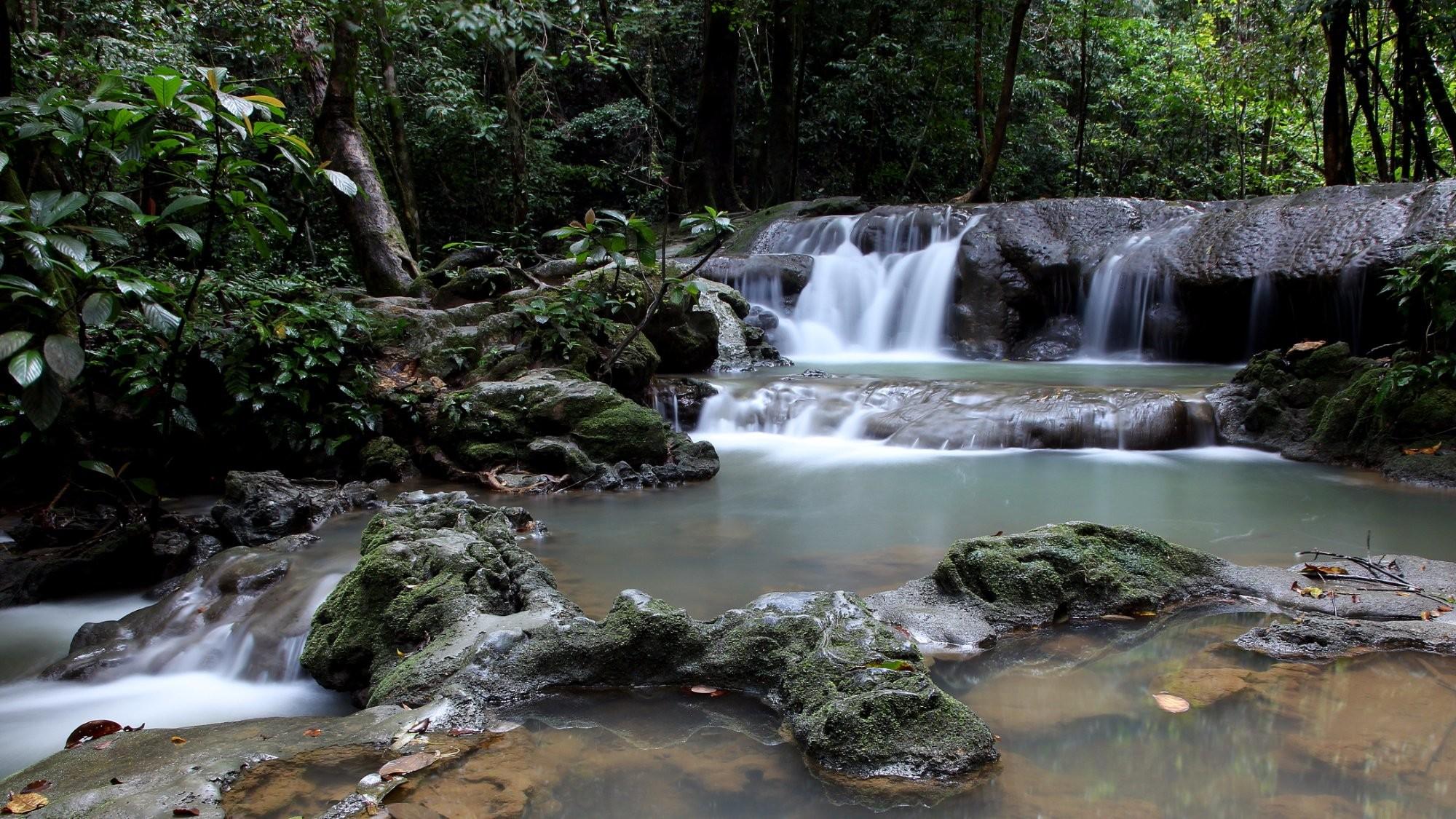 Sa Nang Manora Forest Park (2).jpg
