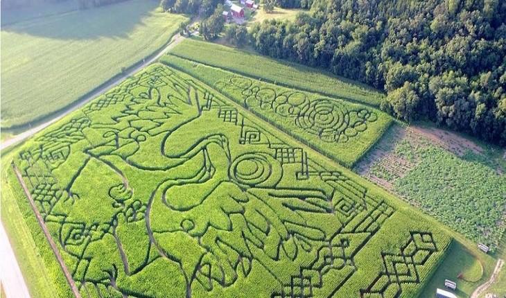 عجیب ترین مزارع هزارتوی دنیا که برای بزرگسالان ساخته شده!