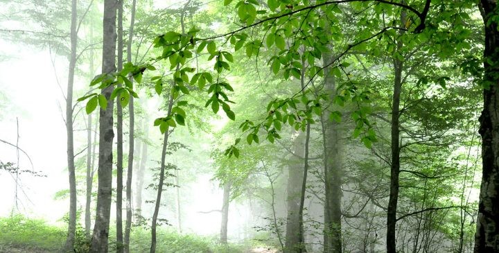 Hezarjarib Forest