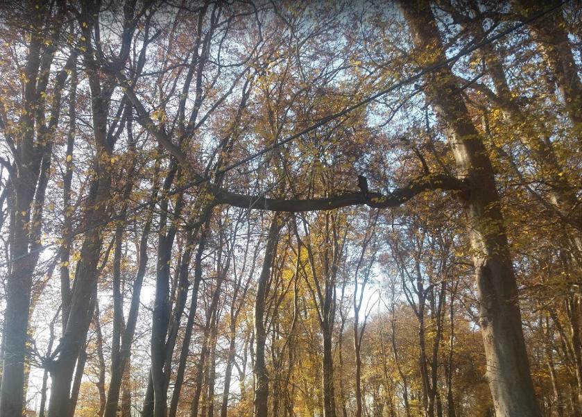 پارک جنگلی اشبلا (2).png
