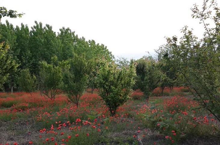Eshpela Village (1).jpg