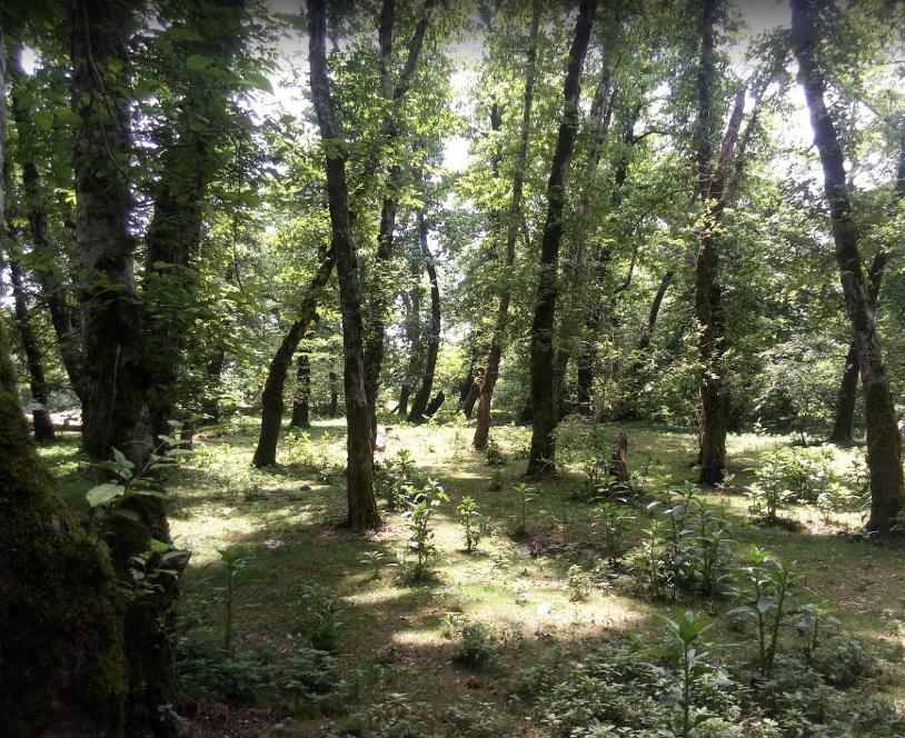 پارک جنگلی اشبلا (1).png