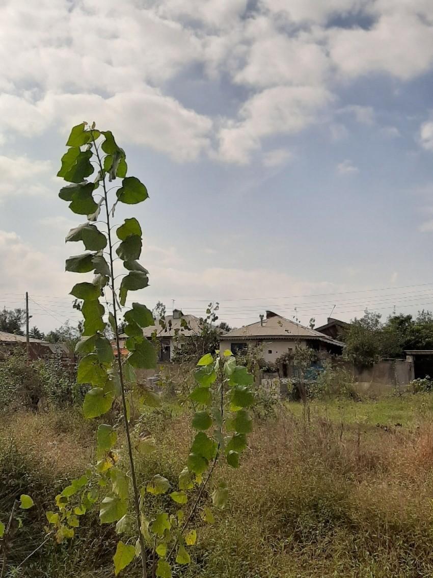 روستای آقا سید شریف
