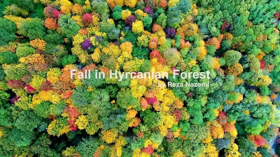 جنگل های هیرکانی، زیباترین ترکیب پاییز با طبیعت در ایران!