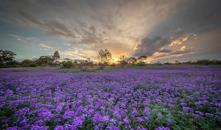 آغاز بهاری عجیب و زیبا در استرالیا، با شروع نیمه دوم سال!