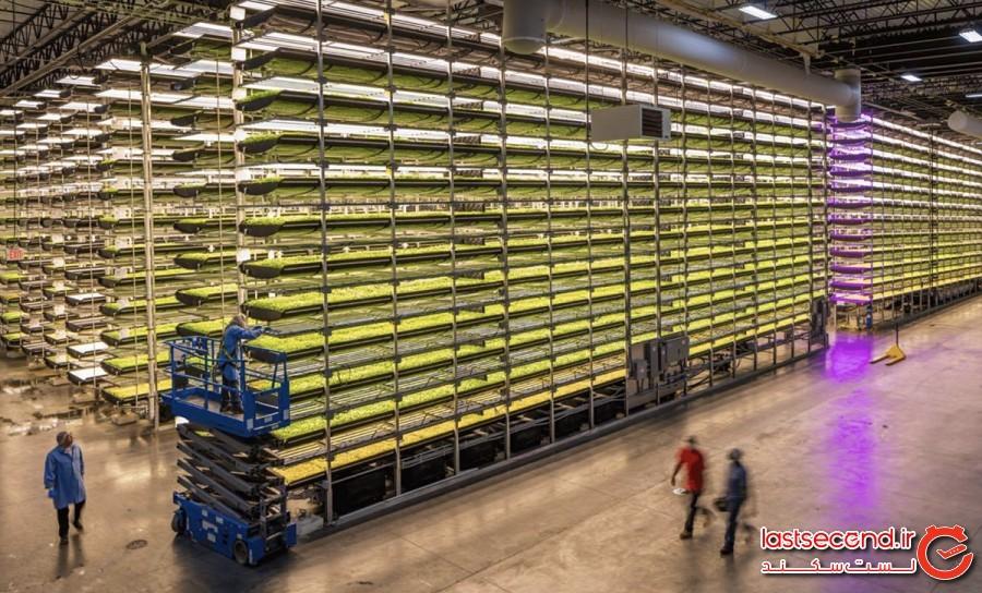 وعده غذایی از مزرعه تا هواپیما، سرویس جدیدی در هواپیمایی سنگاپور