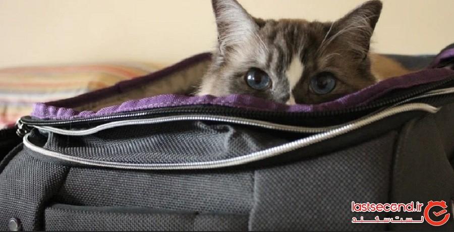 گربهای که نزدیک بود مخفیانه وارد هواپیما شود