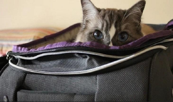 گربهای که می خواست مخفیانه وارد هواپیما شود، به دام افتاد!