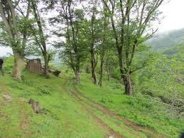 روستای مازیان