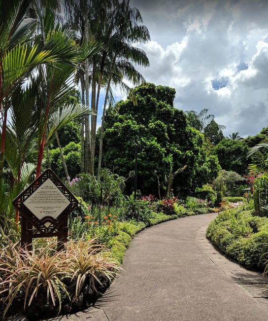National Orchid Garden (1).png