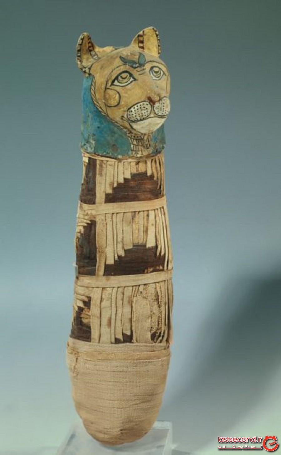 گربه مصری مومیاییشده عجیبی که دارای پنجپا و سه دم است