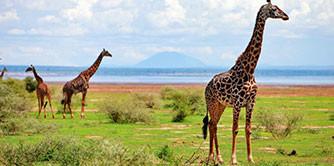 سفر به سرزمین عجایب (سفرنامه آفریقا)