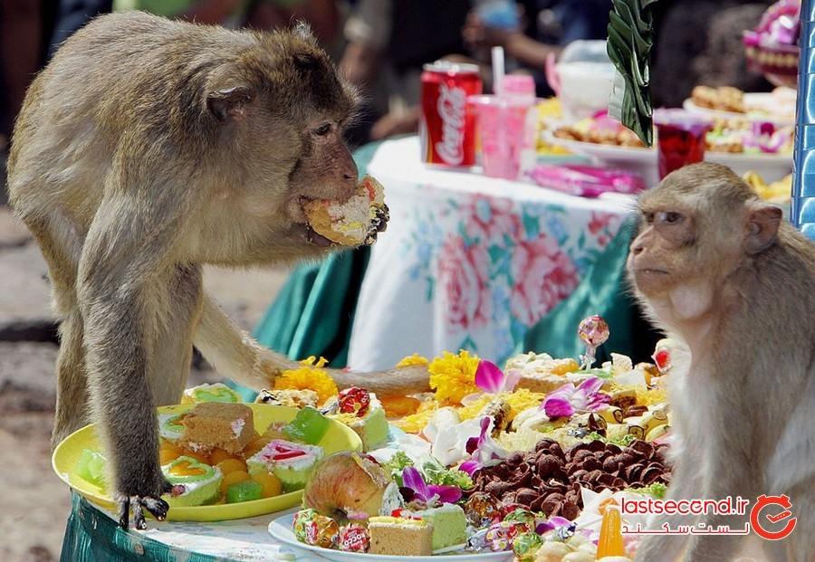 جشنواره بوفه (سلفسرویس) میمون، تایلند