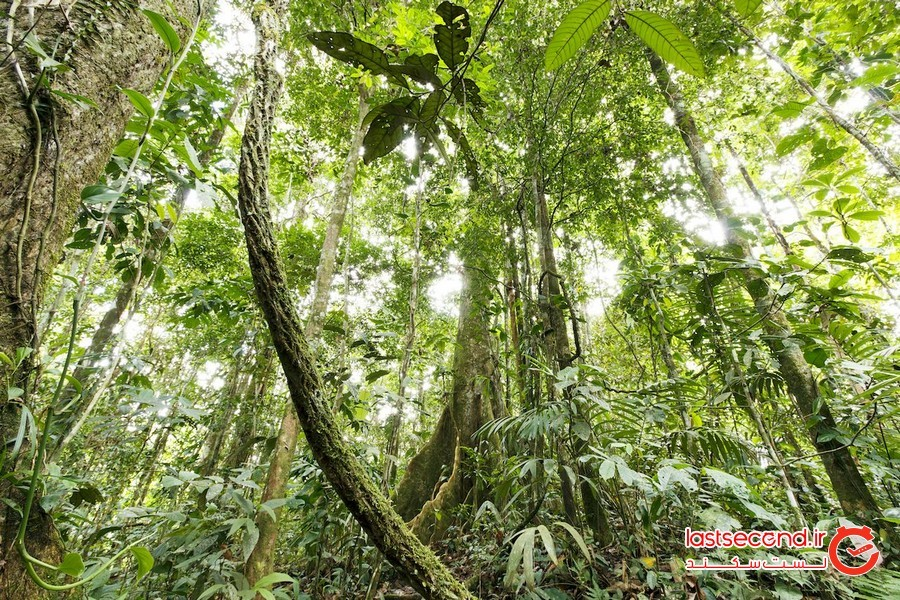 غوطهور شدن در فضای جنگل، آمازون اکوادور