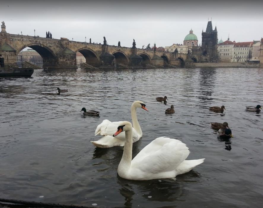 Vltava River (4).png