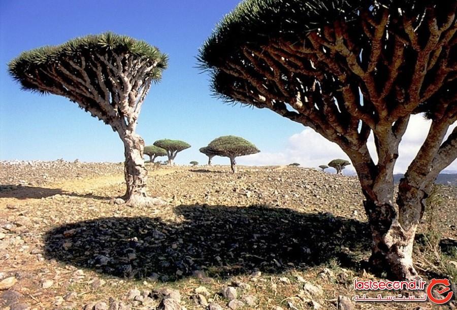 جزیره سقطرا، کشور یمن