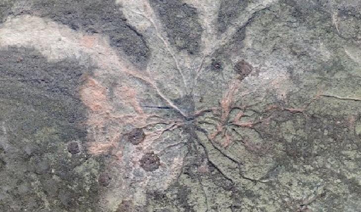 قدیمی ترین جنگل جهان در نیویورک کشف شد!