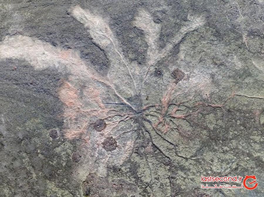 قدیمی ترین جنگل جهان در نیویورک کشف شد