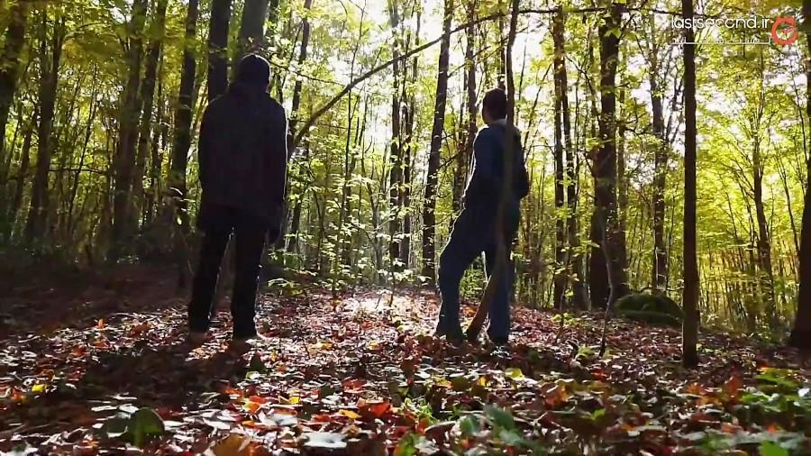 جنگل های راش، سنگده