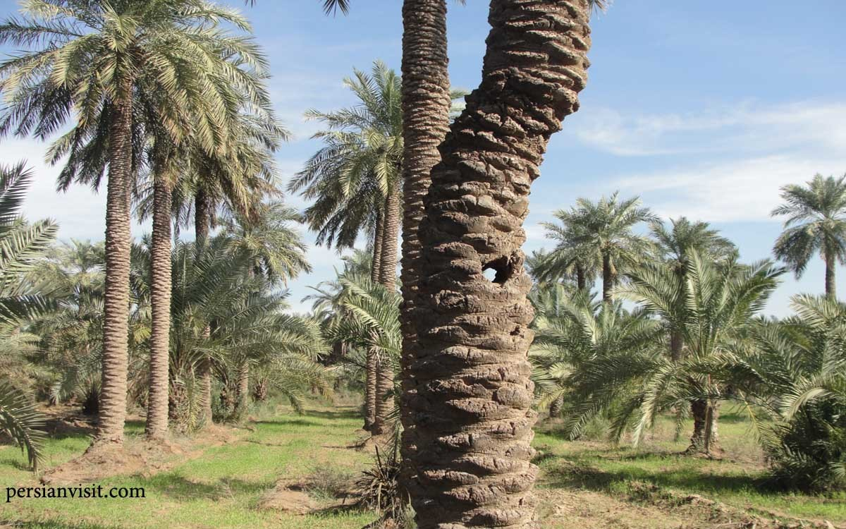 روستای علوه (1).jpg