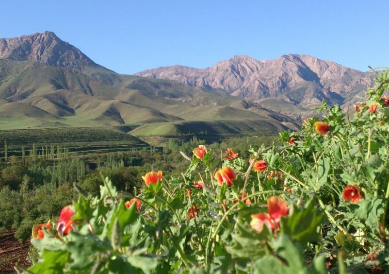 روستای ابدال آباد