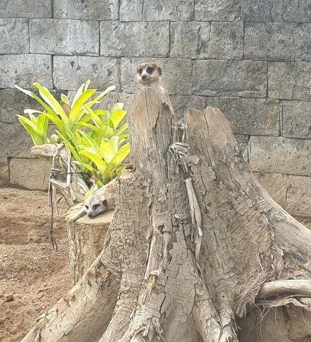 bali-zoo (2).JPG