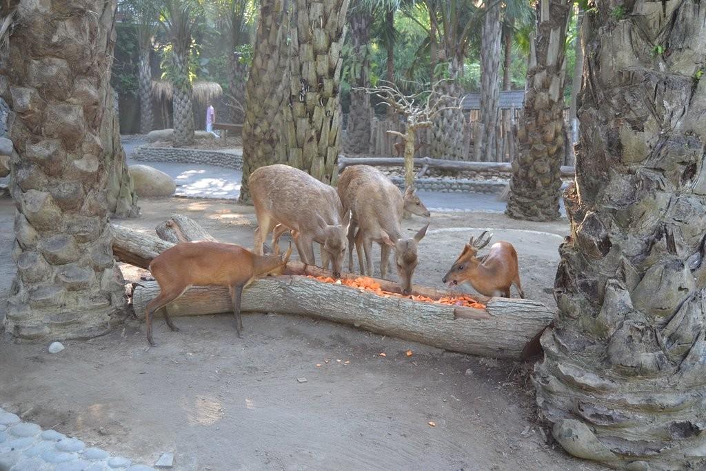 bali-zoo (8).jpg