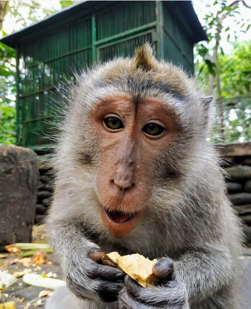 Sacred Monkey Forest Sanctuary (2).jpg
