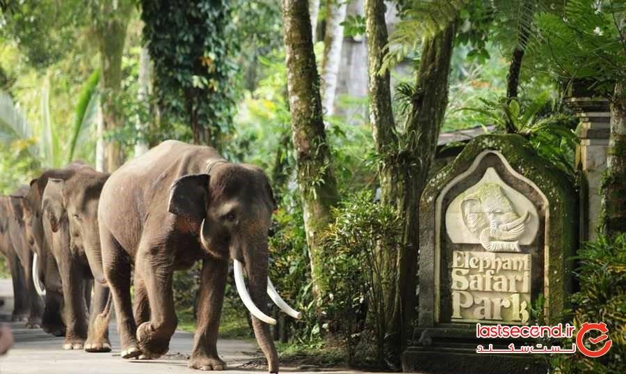 سافاری پارک فیل ها