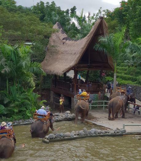 bali-zoo (6).JPG