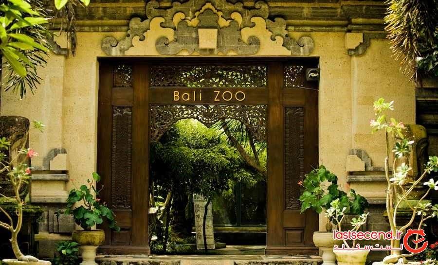 اوج هیجان در باغ وحش بالی و  Treewalks