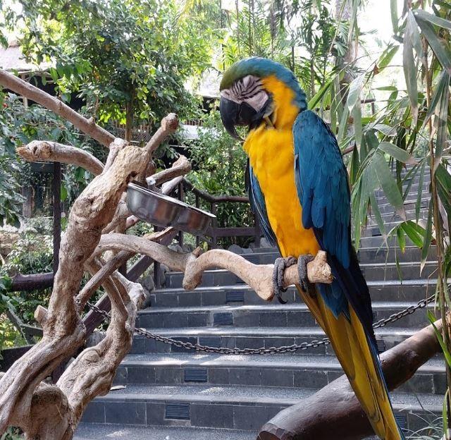 bali-zoo (11).JPG
