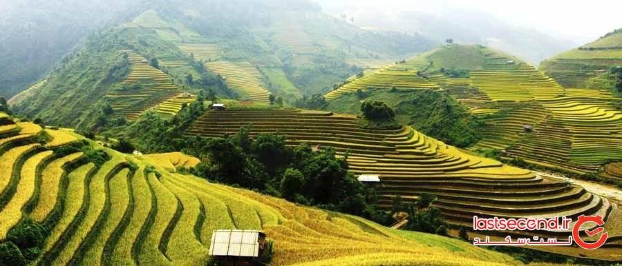 مزارع برنج در منطقه اوبود ( Tegallalang Rice Terraces)