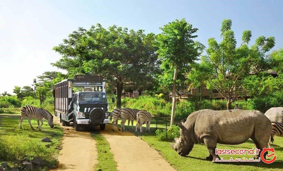 سافاری در بالی و بازدید از پارک حیوانات