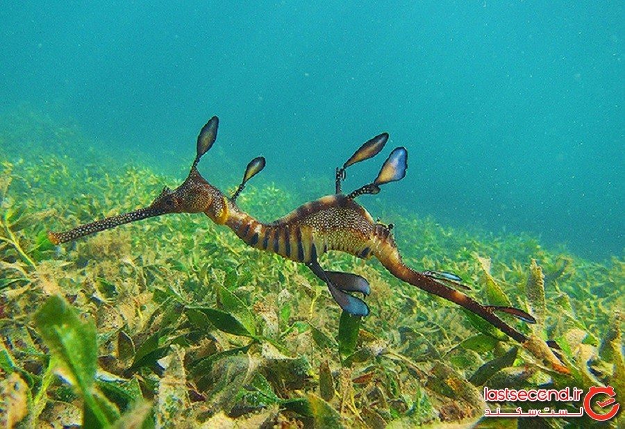 20 تصویر از چیزهایی که تنها میتوان در کف اقیانوس یافت
