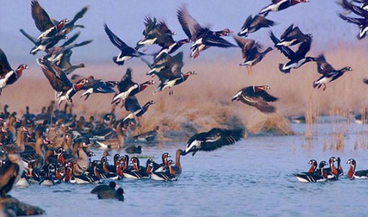 تالاب یوسفکند مهاباد، میزبان همیشگی پرندگان مهاجر!