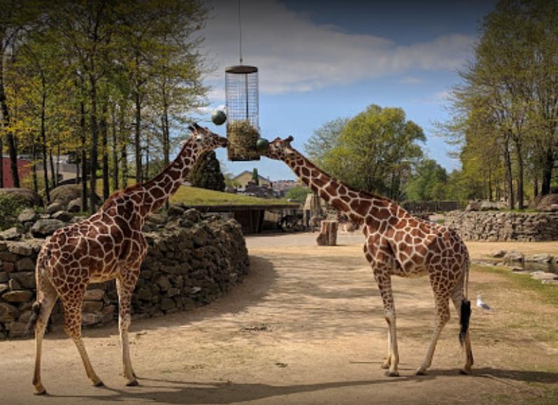 ARTIS Amsterdam Royal Zoo (2).png