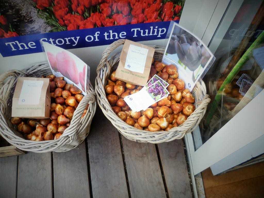 amsterdam-tulip-museum (12).jpg