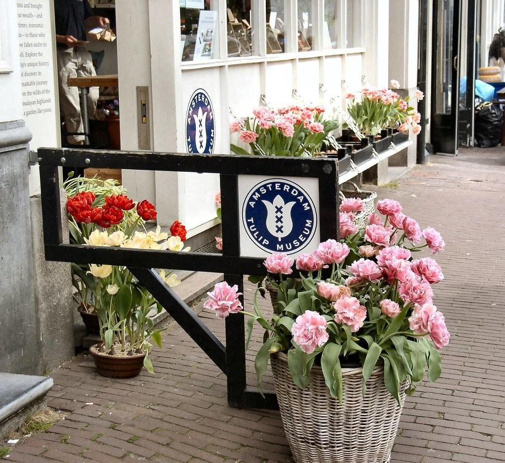 amsterdam-tulip-museum (9).jpg