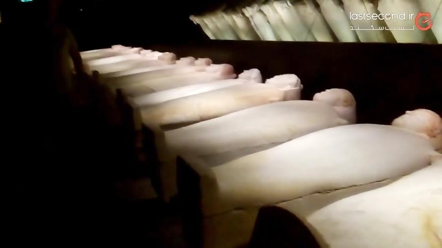 موزه ملی لبنان، عتیقه ایی در بیروت