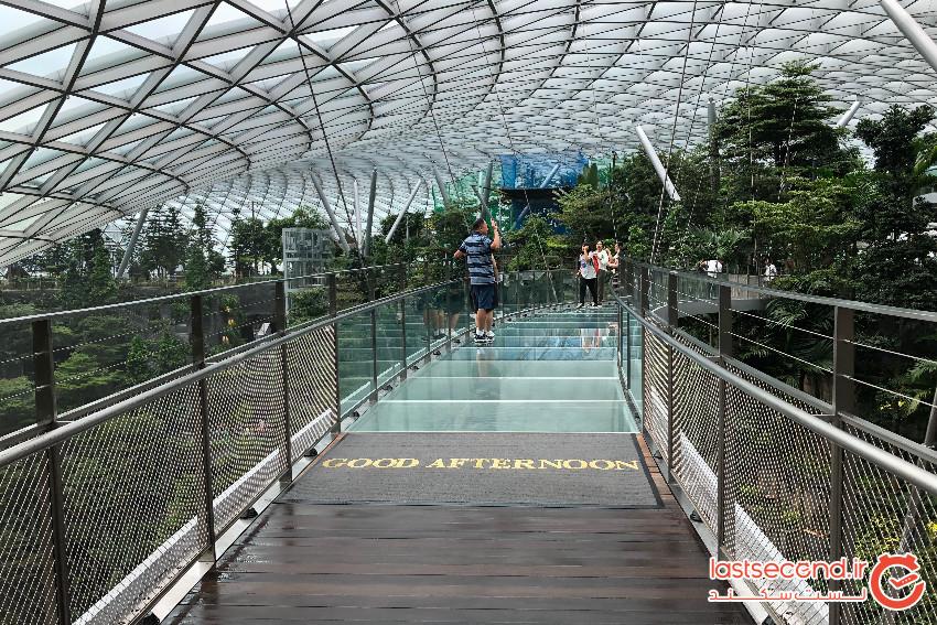 Jewel Canopy Park (1).jpeg