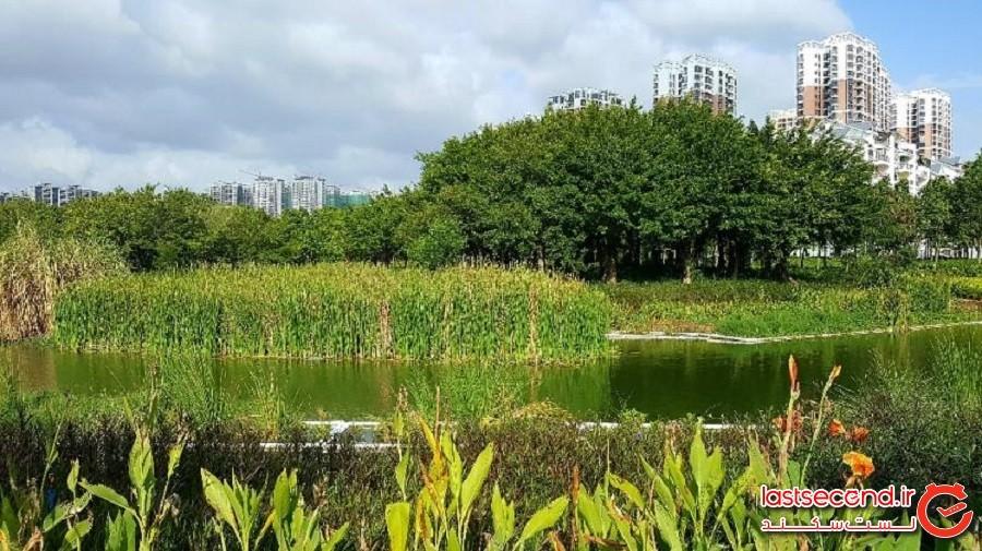 سانیا، شهری در چین که می خواهد از ویروس کرونا جان سالم به در ببرد!