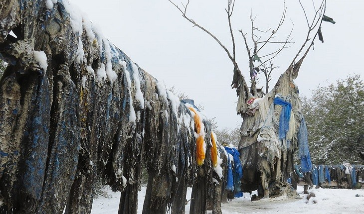درخت مادر؛ درختی مقدس در مغولستان که دروازه جهانی دیگر است!